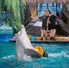 Дельфинарии, океанариумы в Калинине