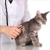 Ветеринарные клиники в Калинине